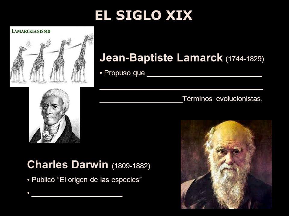 EL SIGLO XIX Jean-Baptiste Lamarck (1744-1829) Propuso que _____________________________ _________________________________________ _____________________Términos evolucionistas.