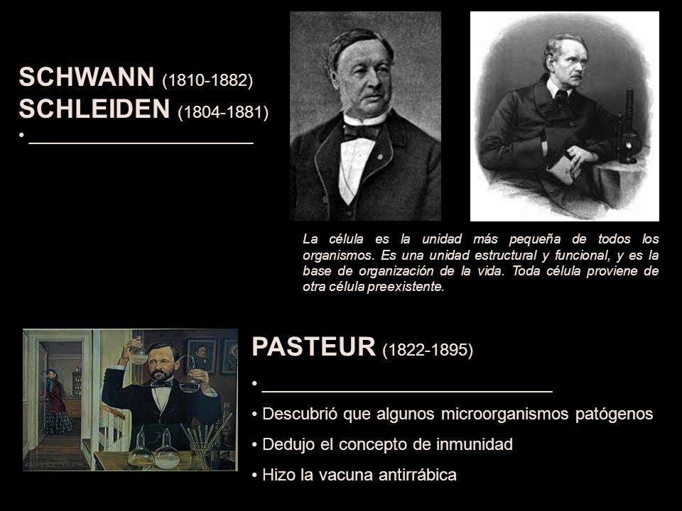 PASTEUR (1822-1895) _______________________________ Descubrió que algunos microorganismos patógenos Dedujo el concepto de inmunidad Hizo la vacuna antirrábica SCHWANN (1810-1882) SCHLEIDEN (1804-1881) ________________________ La célula es la unidad más pequeña de todos los organismos.