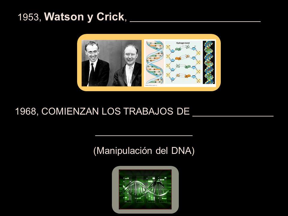 1953, Watson y Crick, _________________________________ 1968, COMIENZAN LOS TRABAJOS DE _______________ __________________ (Manipulación del DNA)