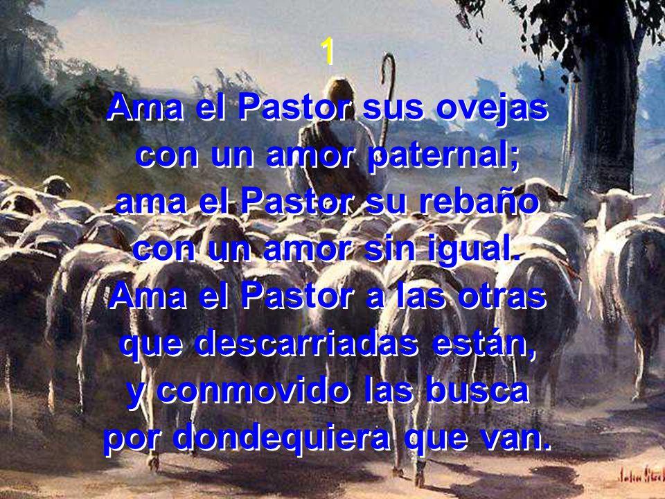 1 Ama el Pastor sus ovejas con un amor paternal; ama el Pastor su rebaño con un amor sin igual. Ama el Pastor a las otras que descarriadas están, y co
