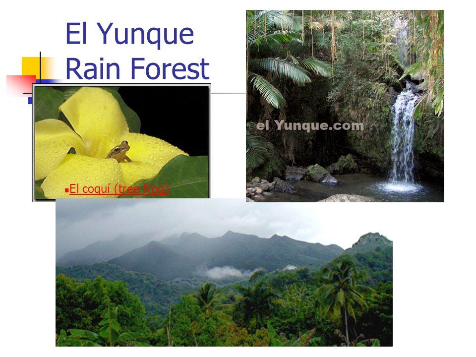 El Yunque Rain Forest El coquí (tree frog)