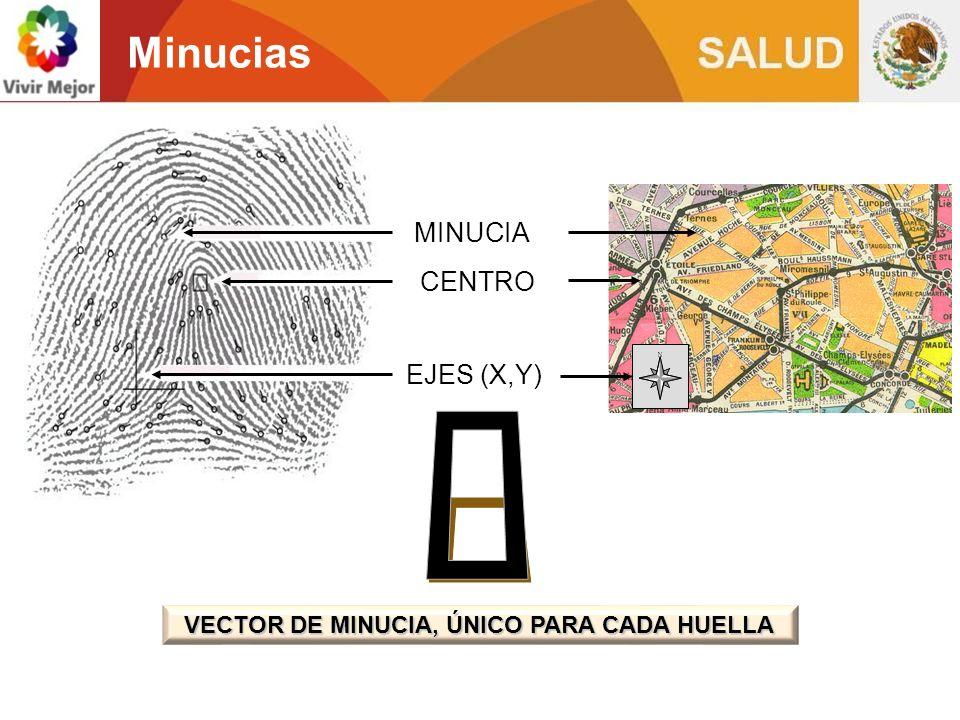 Minucias MINUCIA CENTRO EJES (X,Y) VECTOR DE MINUCIA, ÚNICO PARA CADA HUELLA