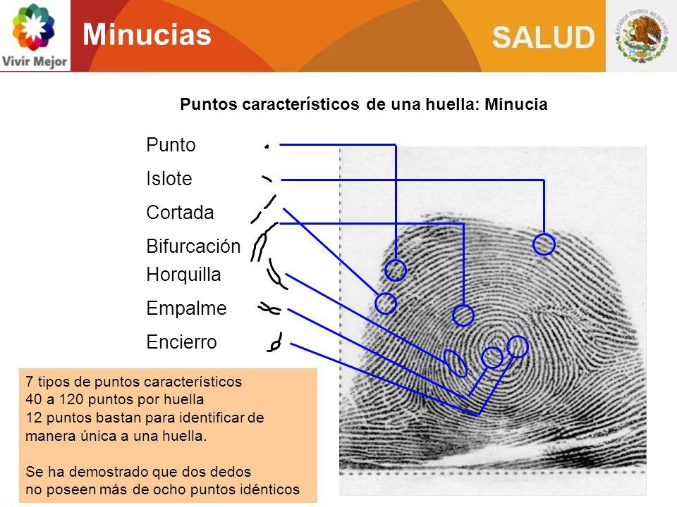 Minucias Puntos característicos de una huella: Minucia Punto Islote Cortada Bifurcación Horquilla Empalme Encierro 7 tipos de puntos característicos 4