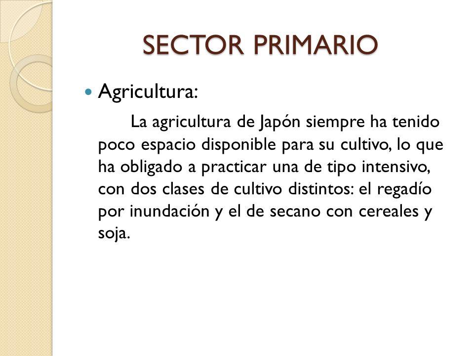 SECTOR PRIMARIO SECTOR PRIMARIO Agricultura: La agricultura de Japón siempre ha tenido poco espacio disponible para su cultivo, lo que ha obligado a p