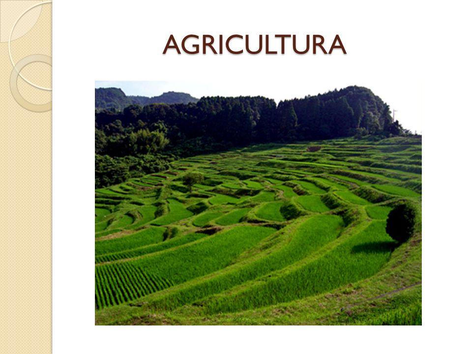 AGRICULTURA AGRICULTURA