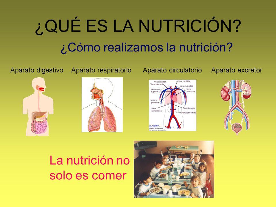 ¿QUÉ ES LA NUTRICIÓN? La nutrición no solo es comer ¿Cómo realizamos la nutrición? Aparato excretorAparato circulatorioAparato respiratorioAparato dig