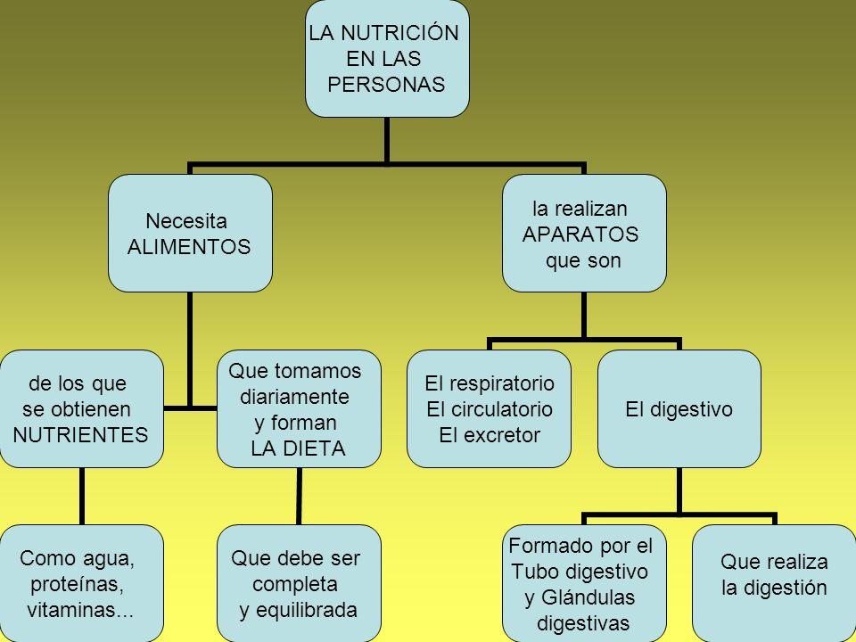 LA NUTRICIÓN EN LAS PERSONAS Necesita ALIMENTOS de los que se obtienen NUTRIENTES Como agua, proteínas, vitaminas... Que tomamos diariamente y forman