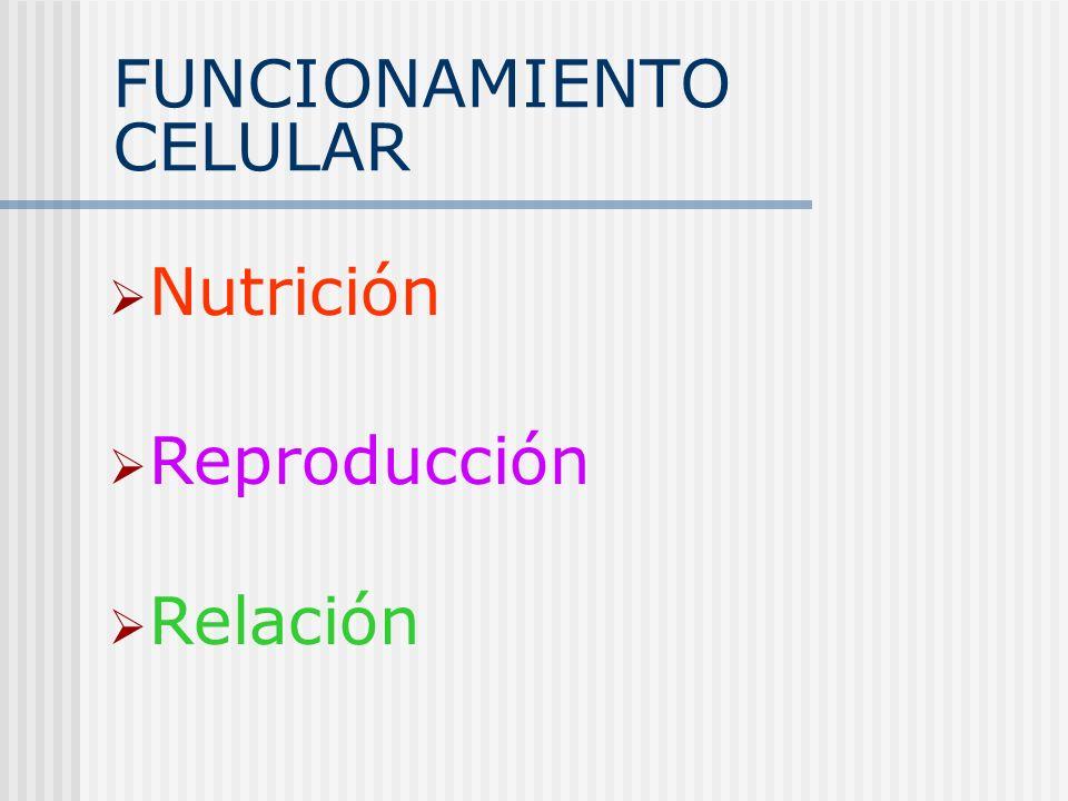 FUNCIONAMIENTO CELULAR Nutrición Reproducción Relación