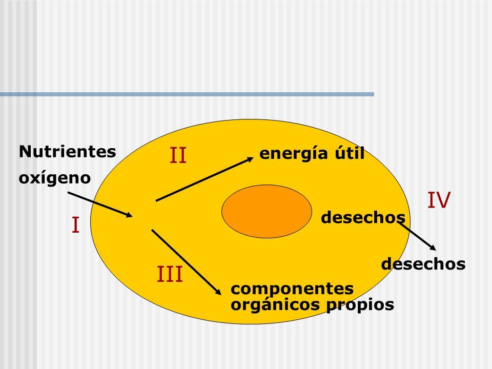 energía útil componentes orgánicos propios Nutrientes oxígeno desechos I II III IV