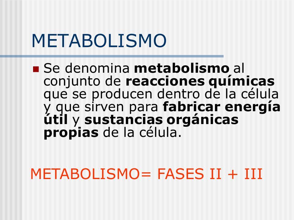METABOLISMO Se denomina metabolismo al conjunto de reacciones químicas que se producen dentro de la célula y que sirven para fabricar energía útil y s