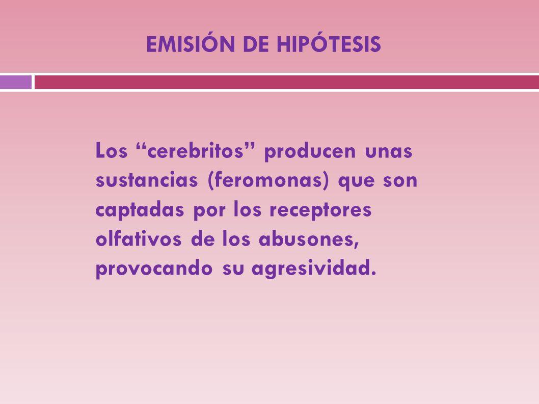 EMISIÓN DE HIPÓTESIS Los cerebritos producen unas sustancias (feromonas) que son captadas por los receptores olfativos de los abusones, provocando su