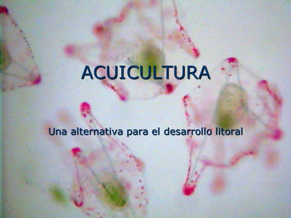 ACUICULTURA Una alternativa para el desarrollo litoral