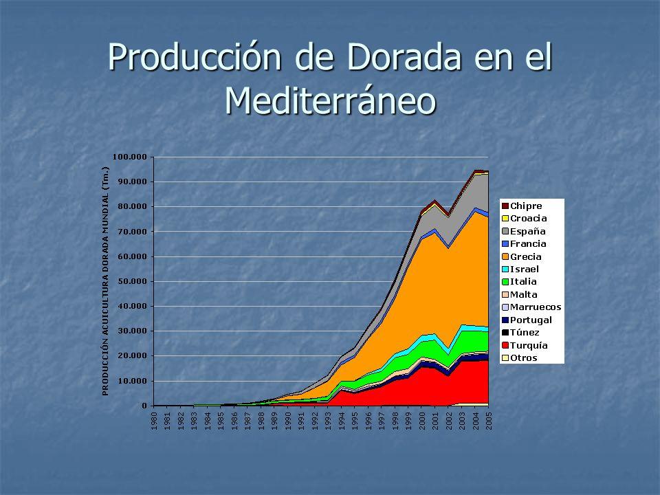 Producción de Dorada en el Mediterráneo