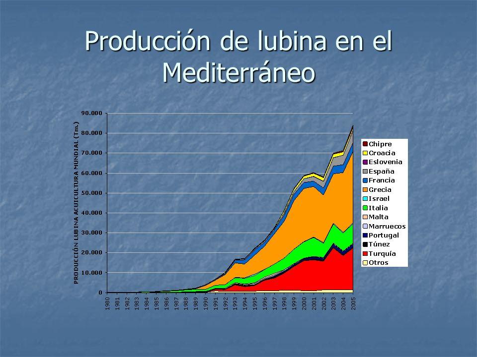 Producción de lubina en el Mediterráneo