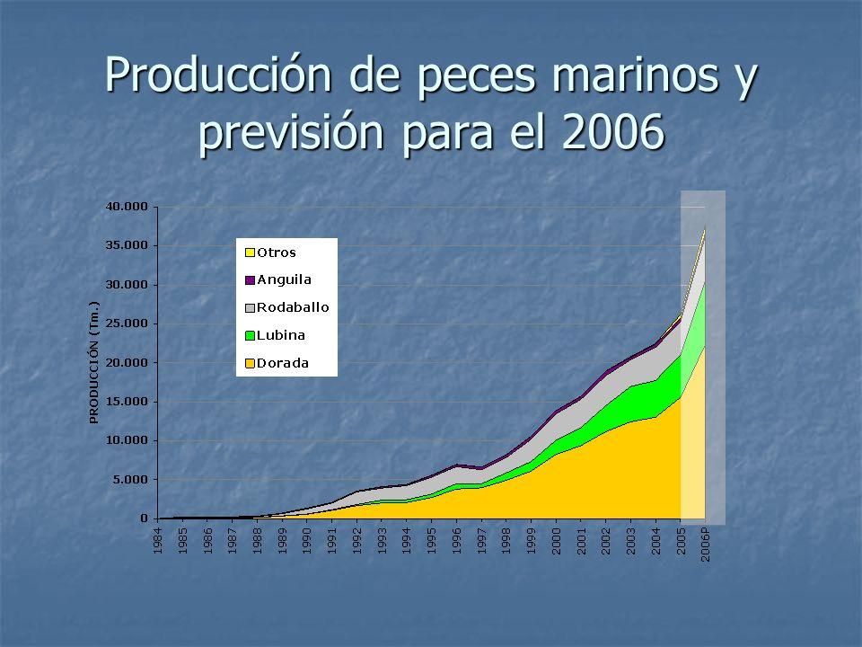 Producción de peces marinos y previsión para el 2006