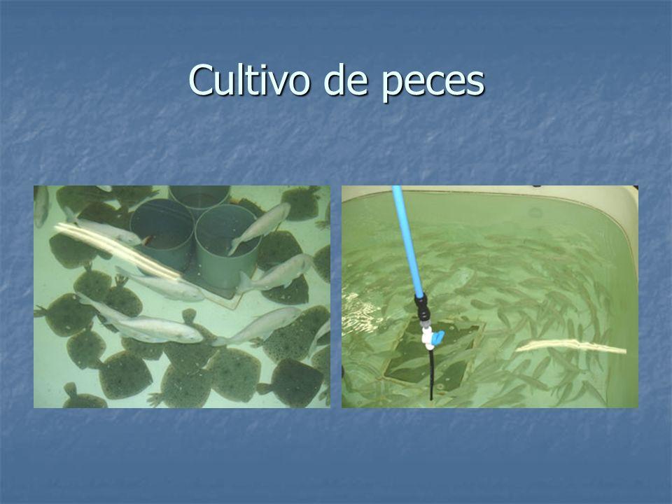 Cultivo de peces