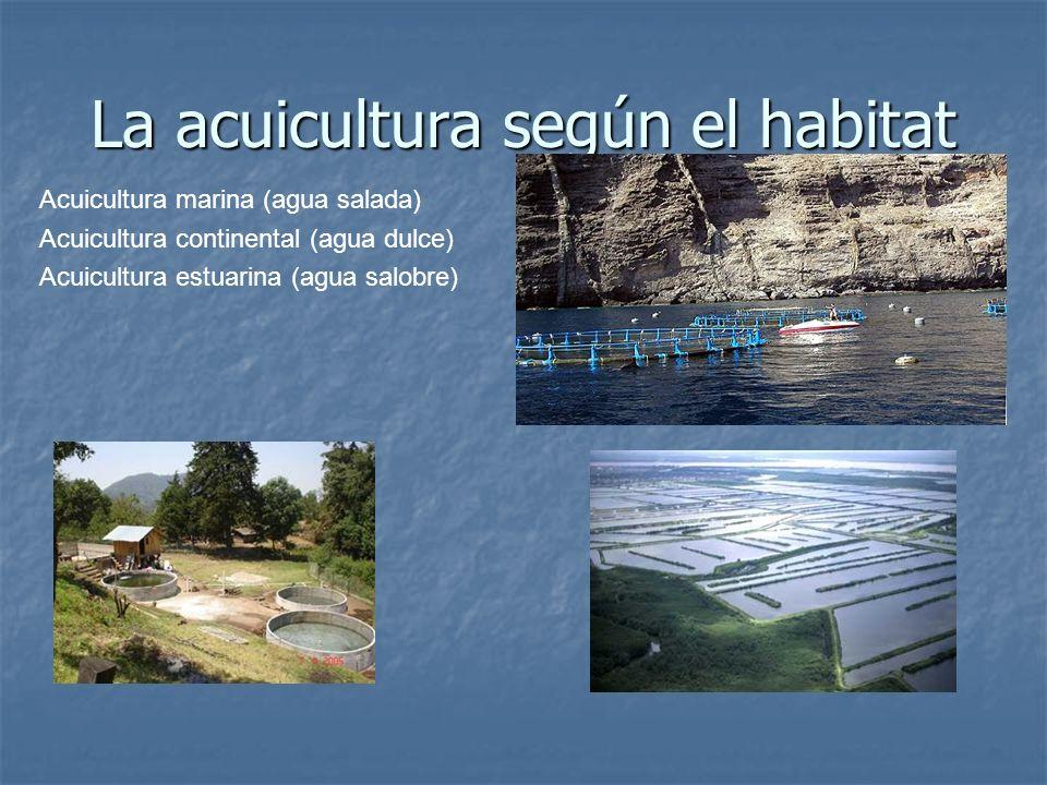 La acuicultura según el habitat Acuicultura marina (agua salada) Acuicultura continental (agua dulce) Acuicultura estuarina (agua salobre)