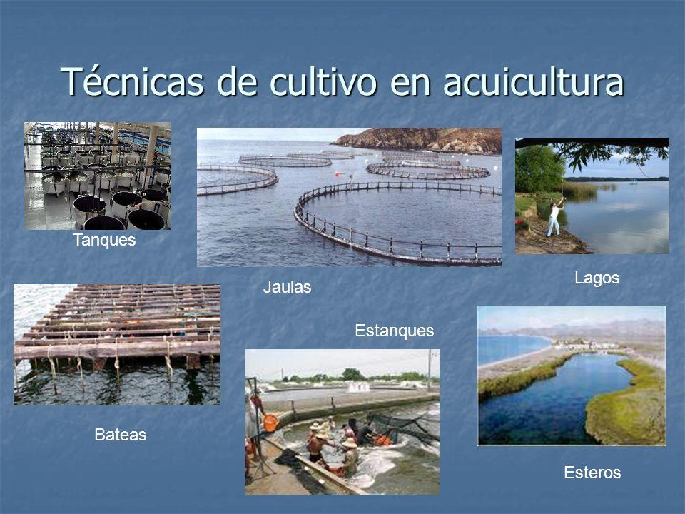 Técnicas de cultivo en acuicultura Tanques Jaulas Bateas Esteros Lagos Estanques