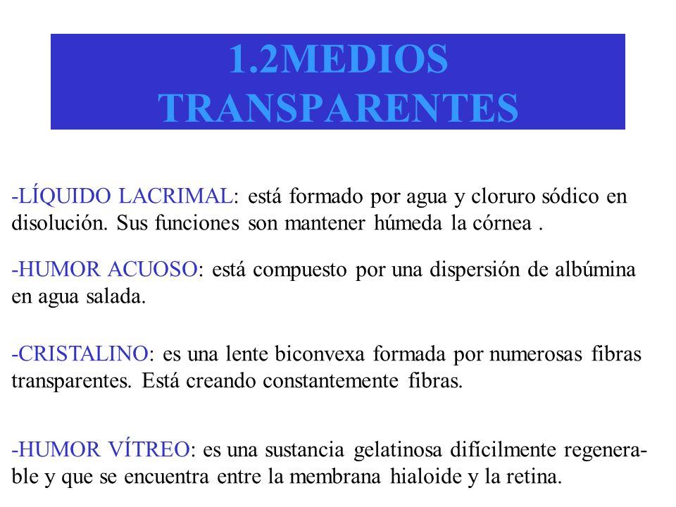 1.2MEDIOS TRANSPARENTES -LÍQUIDO LACRIMAL: está formado por agua y cloruro sódico en disolución. Sus funciones son mantener húmeda la córnea. -HUMOR A
