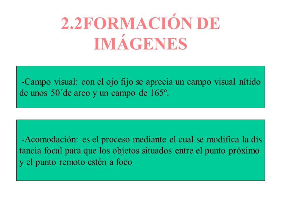 2.2FORMACIÓN DE IMÁGENES -Campo visual: con el ojo fijo se aprecia un campo visual nítido de unos 50´de arco y un campo de 165º. -Acomodación: es el p