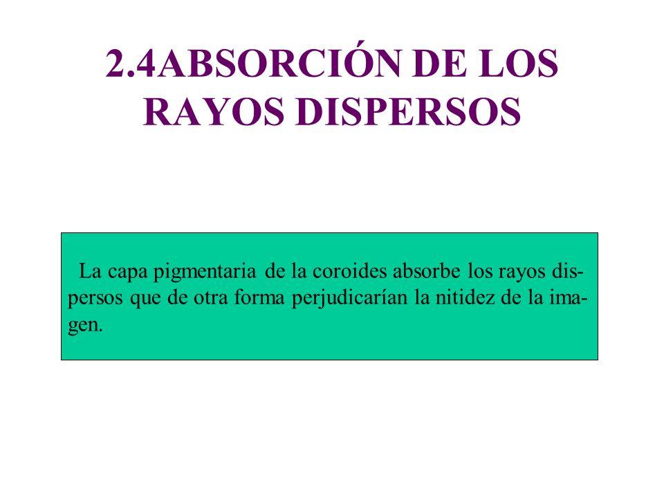 2.4ABSORCIÓN DE LOS RAYOS DISPERSOS La capa pigmentaria de la coroides absorbe los rayos dis- persos que de otra forma perjudicarían la nitidez de la