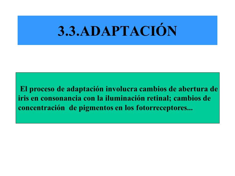 3.3.ADAPTACIÓN El proceso de adaptación involucra cambios de abertura de iris en consonancia con la iluminación retinal; cambios de concentración de p