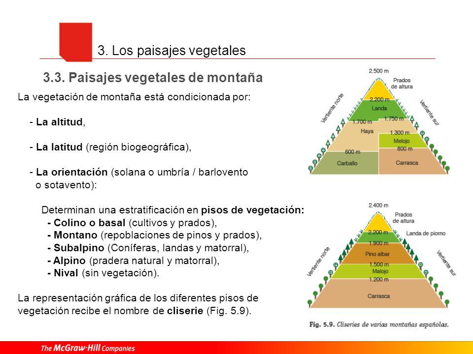 3. Los paisajes vegetales 3.3. Paisajes vegetales de montaña La vegetación de montaña está condicionada por: - La altitud, - La latitud (región biogeo
