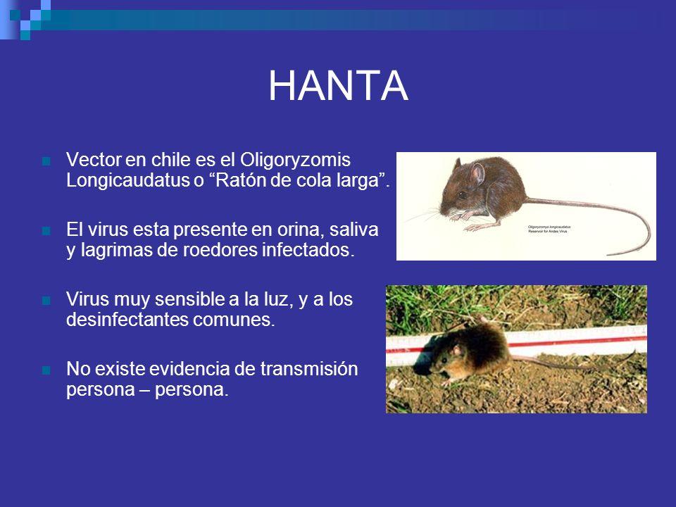 HANTA Vector en chile es el Oligoryzomis Longicaudatus o Ratón de cola larga. El virus esta presente en orina, saliva y lagrimas de roedores infectado