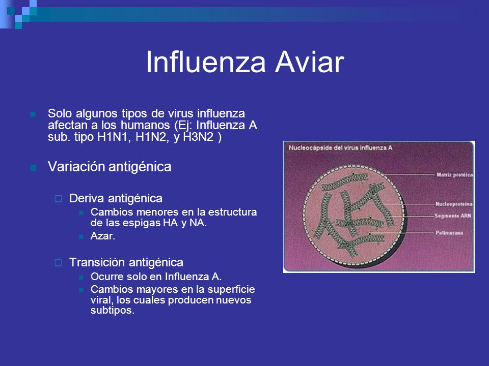 Influenza Aviar Solo algunos tipos de virus influenza afectan a los humanos (Ej: Influenza A sub. tipo H1N1, H1N2, y H3N2 ) Variación antigénica Deriv