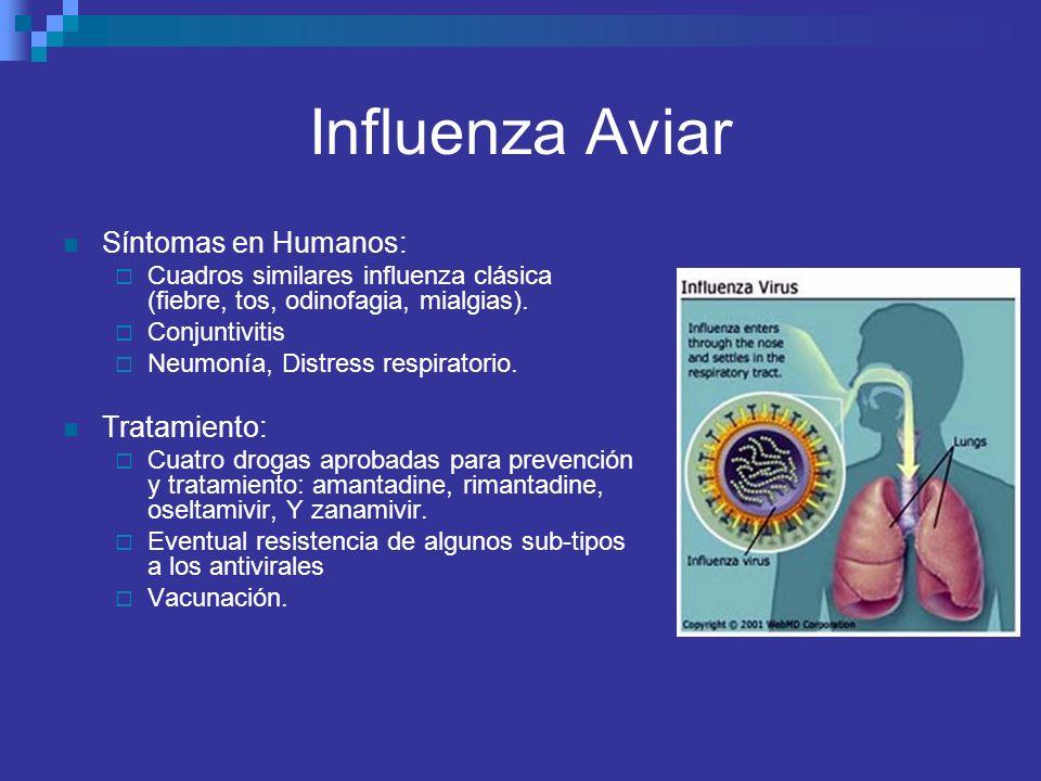 Influenza Aviar Síntomas en Humanos: Cuadros similares influenza clásica (fiebre, tos, odinofagia, mialgias). Conjuntivitis Neumonía, Distress respira