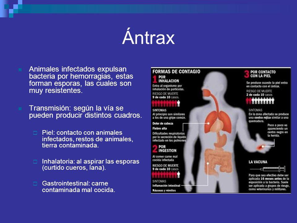 Ántrax Animales infectados expulsan bacteria por hemorragias, estas forman esporas, las cuales son muy resistentes. Transmisión: según la vía se puede