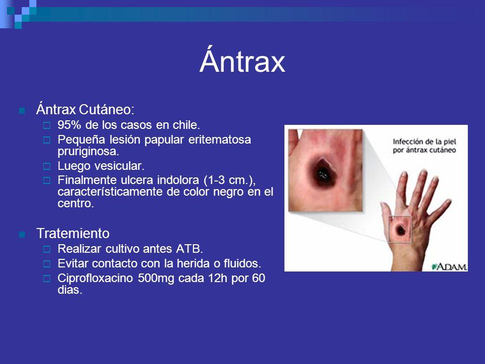 Ántrax Ántrax Cutáneo: 95% de los casos en chile. Pequeña lesión papular eritematosa pruriginosa. Luego vesicular. Finalmente ulcera indolora (1-3 cm.