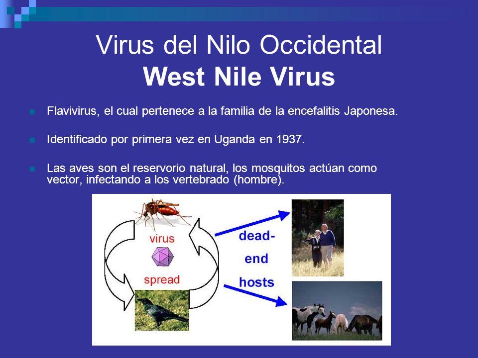 Flavivirus, el cual pertenece a la familia de la encefalitis Japonesa. Identificado por primera vez en Uganda en 1937. Las aves son el reservorio natu