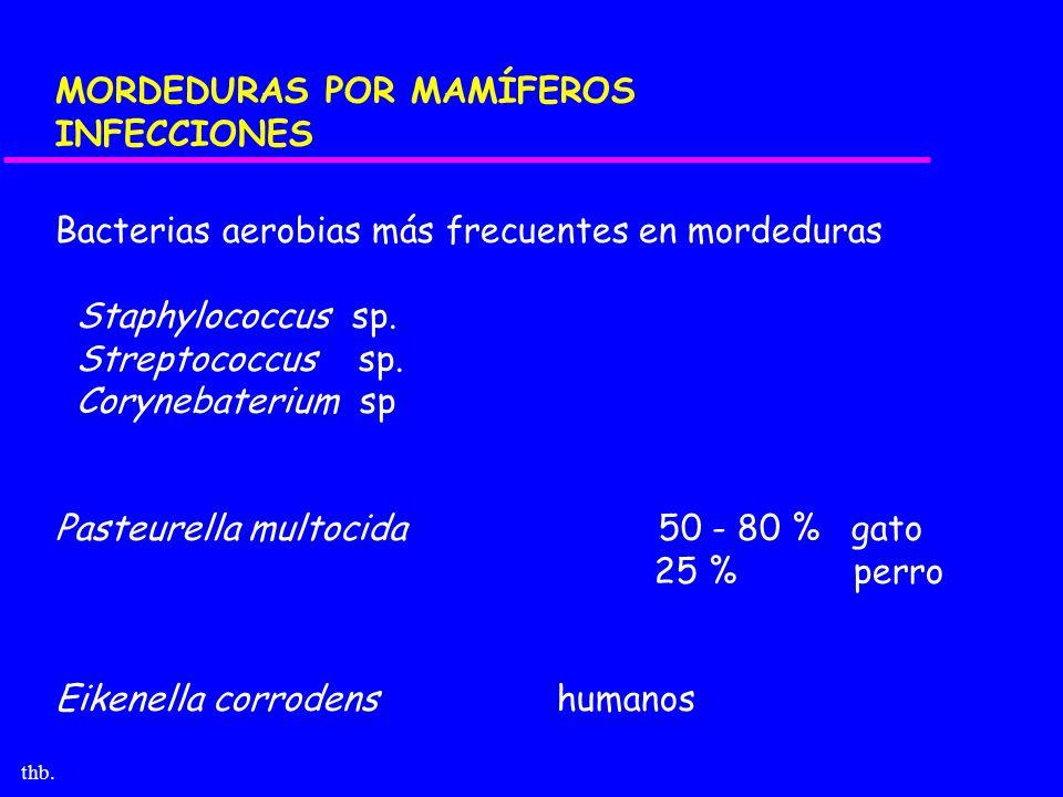 thb. MORDEDURAS POR MAMÍFEROS INFECCIONES Bacterias aerobias más frecuentes en mordeduras Staphylococcus sp. Streptococcus sp. Corynebaterium sp Paste