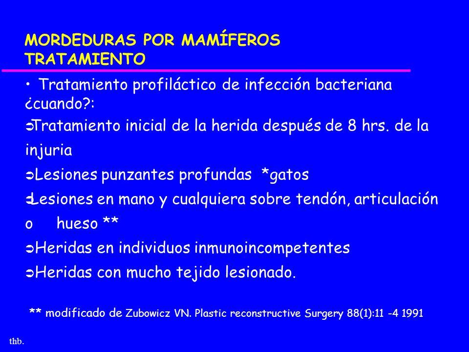thb. MORDEDURAS POR MAMÍFEROS TRATAMIENTO Tratamiento profiláctico de infección bacteriana ¿cuando?: Tratamiento inicial de la herida después de 8 hrs