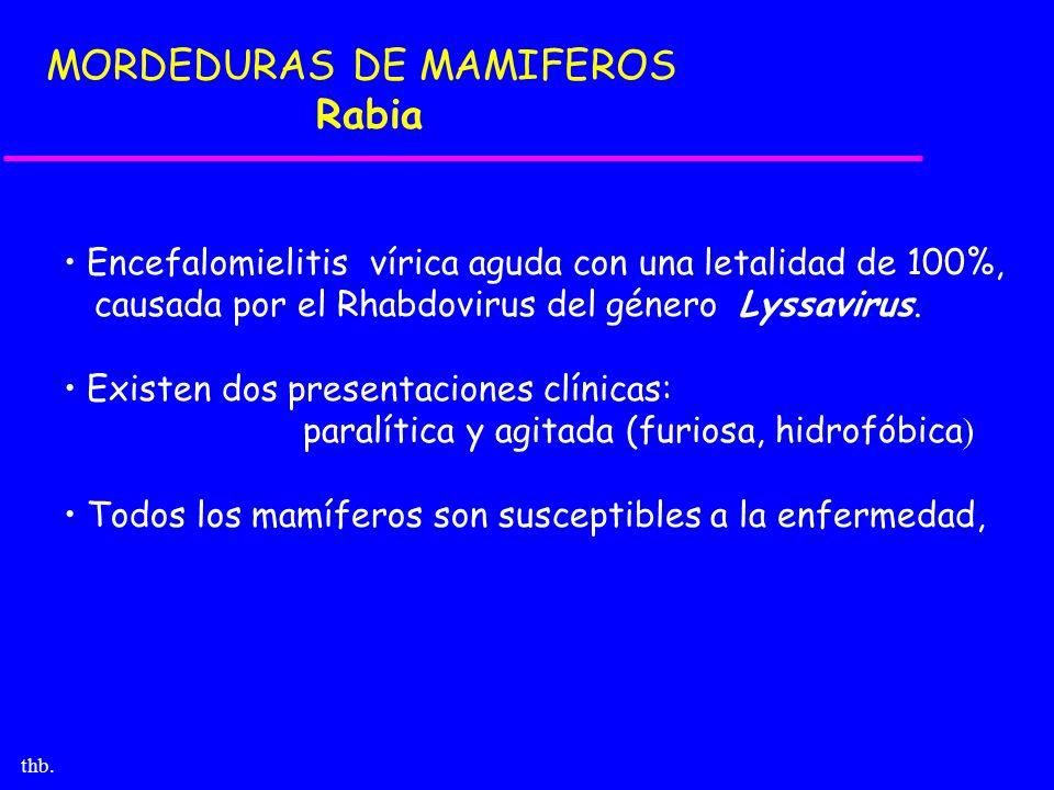 thb. MORDEDURAS DE MAMIFEROS Rabia Encefalomielitis vírica aguda con una letalidad de 100%, causada por el Rhabdovirus del género Lyssavirus. Existen