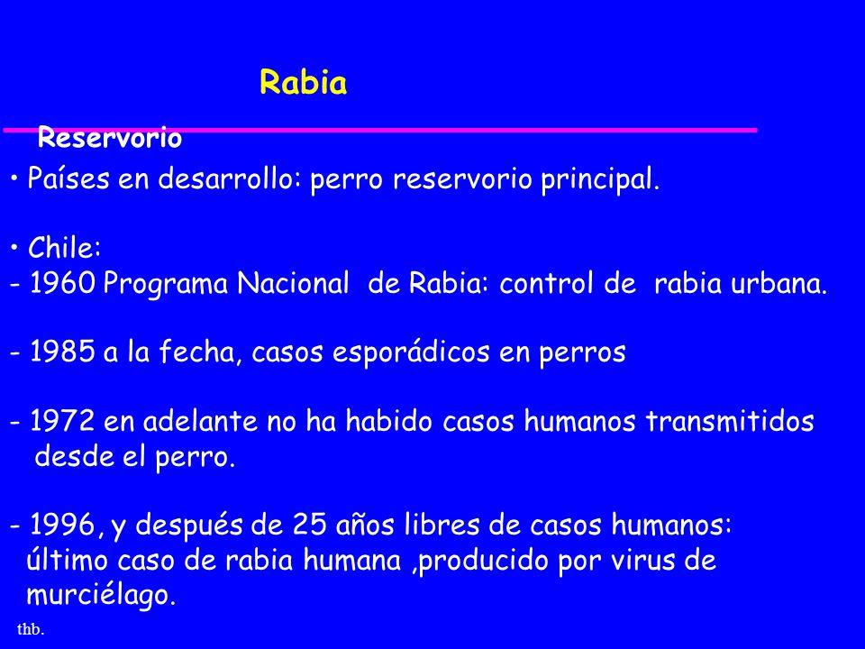 thb. Rabia Países en desarrollo: perro reservorio principal. Chile: - 1960 Programa Nacional de Rabia: control de rabia urbana. - 1985 a la fecha, cas