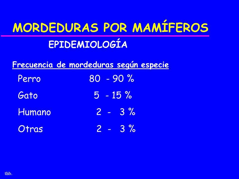 thb. MORDEDURAS POR MAMÍFEROS EPIDEMIOLOGÍA Frecuencia de mordeduras según especie Perro 80 - 90 % Gato 5 - 15 % Humano 2 - 3 % Otras 2 - 3 %