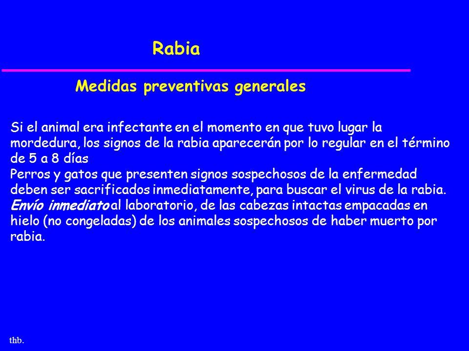 thb. Rabia Medidas preventivas generales Si el animal era infectante en el momento en que tuvo lugar la mordedura, los signos de la rabia aparecerán p