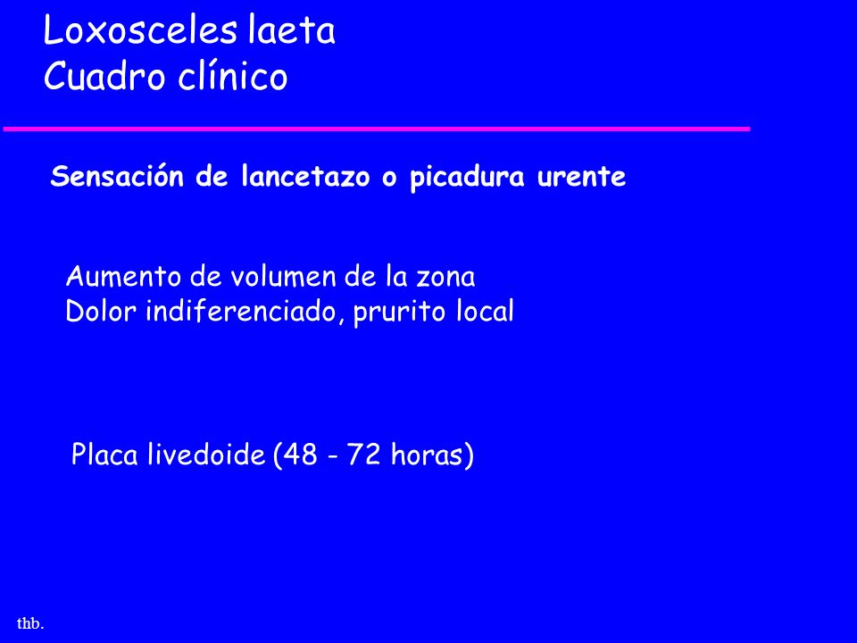 thb. Loxosceles laeta Cuadro clínico Sensación de lancetazo o picadura urente Aumento de volumen de la zona Dolor indiferenciado, prurito local Placa