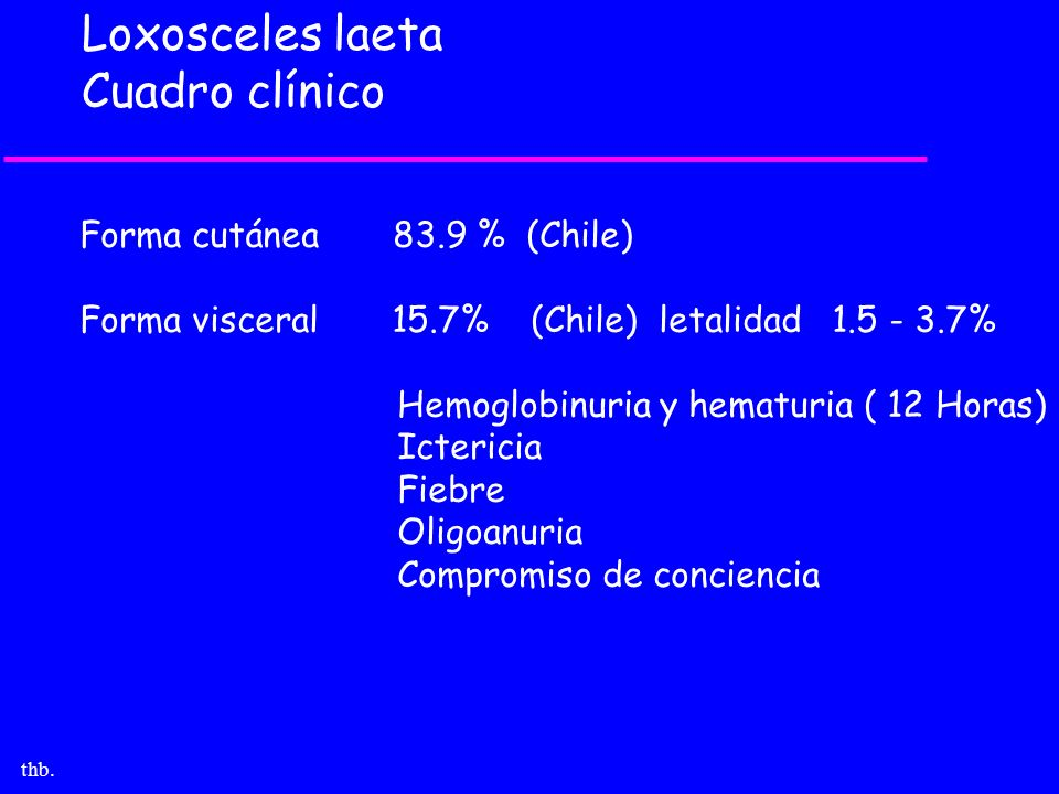 thb. Loxosceles laeta Cuadro clínico Forma cutánea 83.9 % (Chile) Forma visceral 15.7% (Chile) letalidad 1.5 - 3.7% Hemoglobinuria y hematuria ( 12 Ho