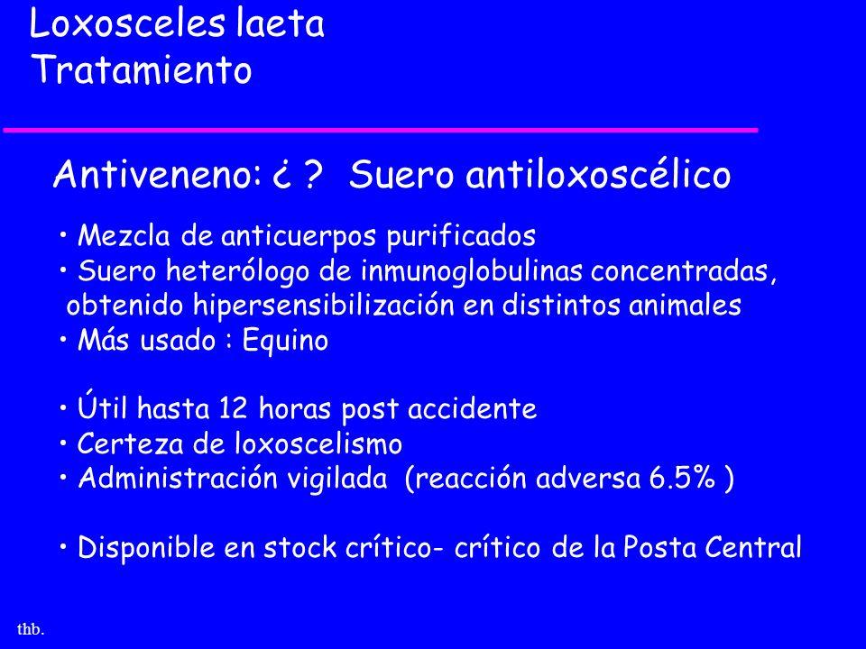 thb. Loxosceles laeta Tratamiento Antiveneno: ¿ ? Suero antiloxoscélico Mezcla de anticuerpos purificados Suero heterólogo de inmunoglobulinas concent
