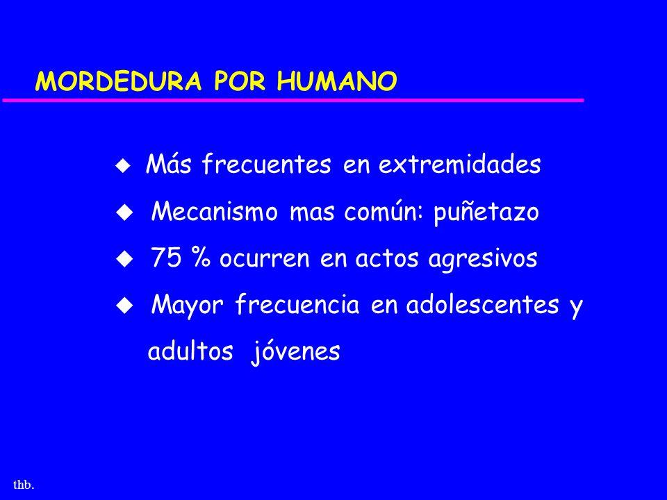 thb. MORDEDURA POR HUMANO u Más frecuentes en extremidades u Mecanismo mas común: puñetazo u 75 % ocurren en actos agresivos u Mayor frecuencia en ado