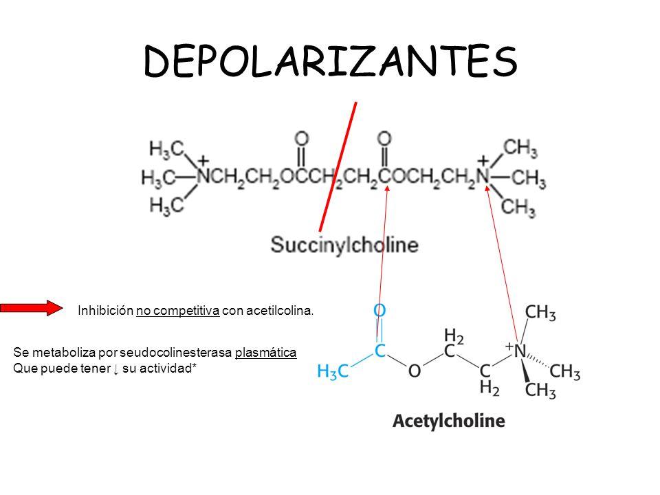 DEPOLARIZANTES Inhibición no competitiva con acetilcolina. Se metaboliza por seudocolinesterasa plasmática Que puede tener su actividad*