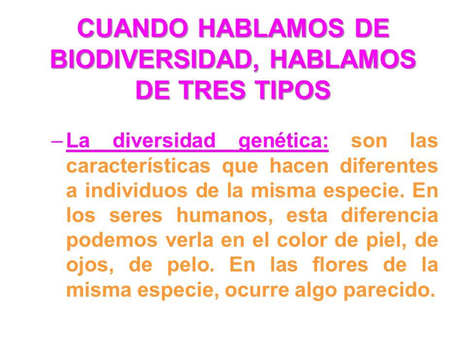 CUANDO HABLAMOS DE BIODIVERSIDAD, HABLAMOS DE TRES TIPOS –La diversidad genética: son las características que hacen diferentes a individuos de la mism