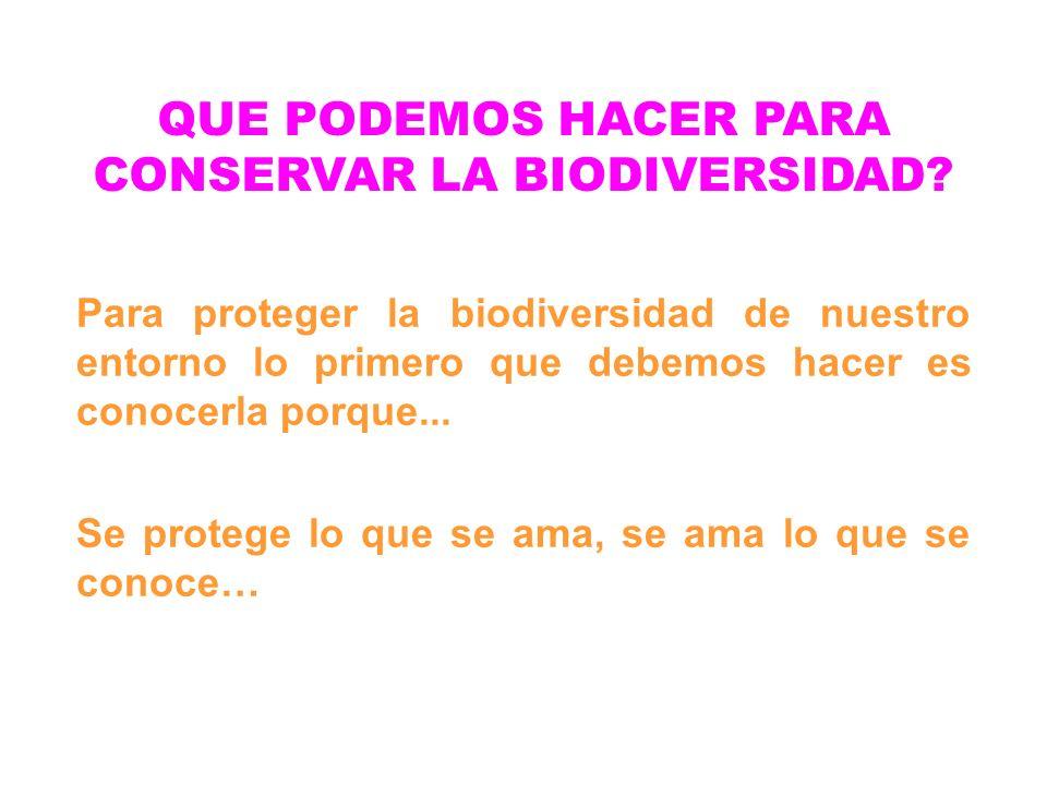QUE PODEMOS HACER PARA CONSERVAR LA BIODIVERSIDAD? Para proteger la biodiversidad de nuestro entorno lo primero que debemos hacer es conocerla porque.