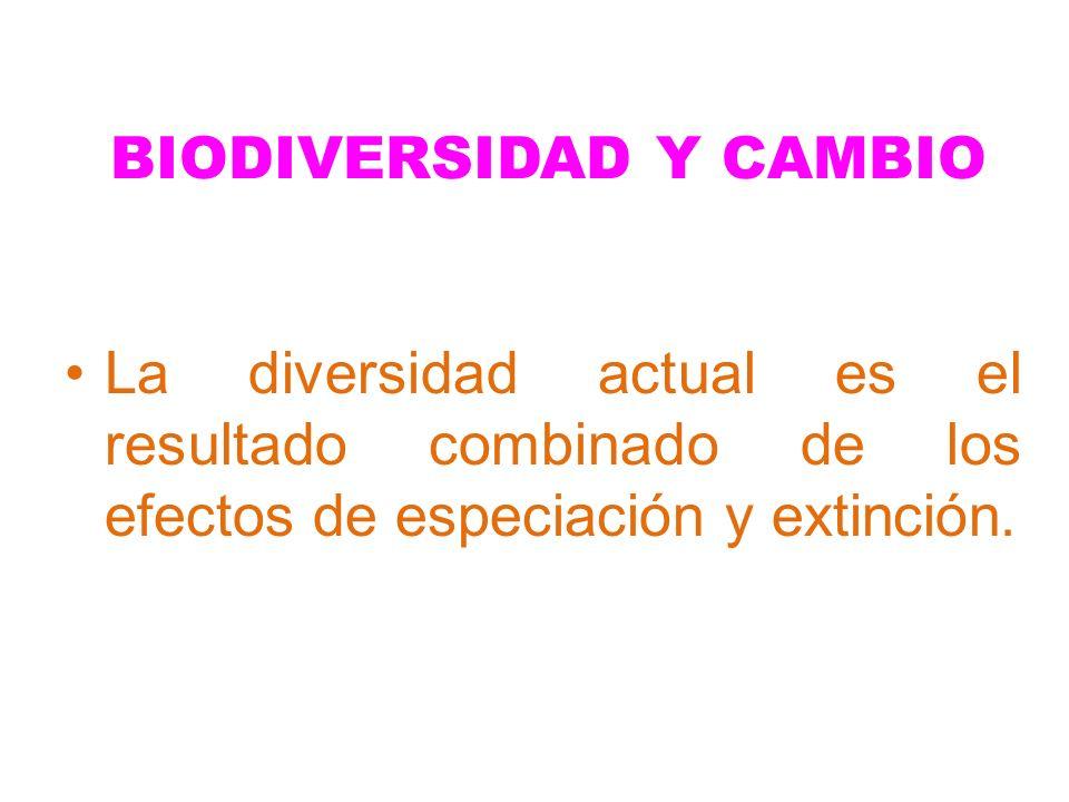 BIODIVERSIDAD Y CAMBIO La diversidad actual es el resultado combinado de los efectos de especiación y extinción.