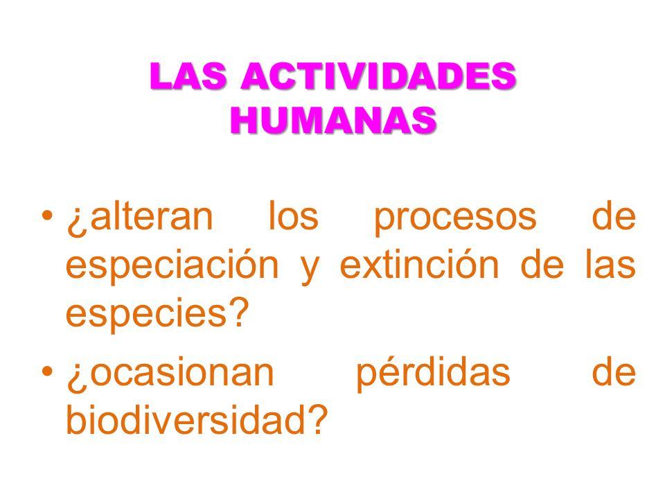 LAS ACTIVIDADES HUMANAS ¿alteran los procesos de especiación y extinción de las especies? ¿ocasionan pérdidas de biodiversidad?