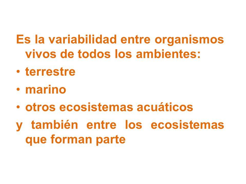 Es la variabilidad entre organismos vivos de todos los ambientes: terrestre marino otros ecosistemas acuáticos y también entre los ecosistemas que for