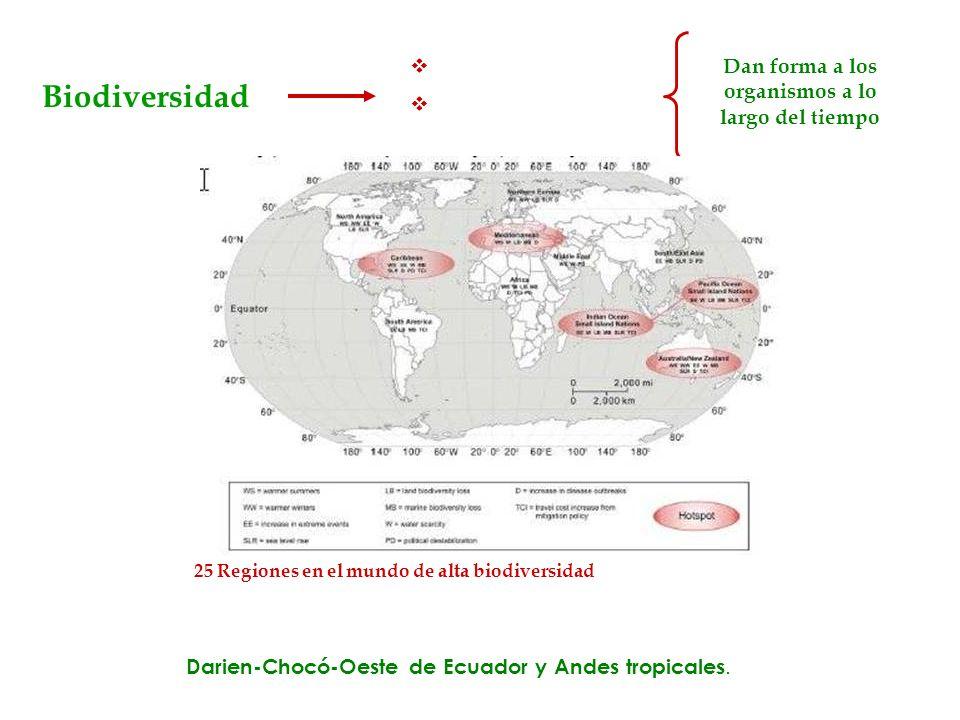 Biodiversidad Formas de vida Procesos ecológicos y evolutivos Dan forma a los organismos a lo largo del tiempo Variedad 25 Regiones en el mundo de alt